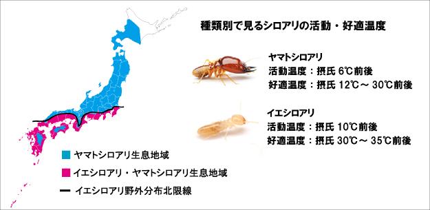 シロアリ プロに学ぶ!シロアリ対策の基本:第2話 「羽アリが大量に発生!